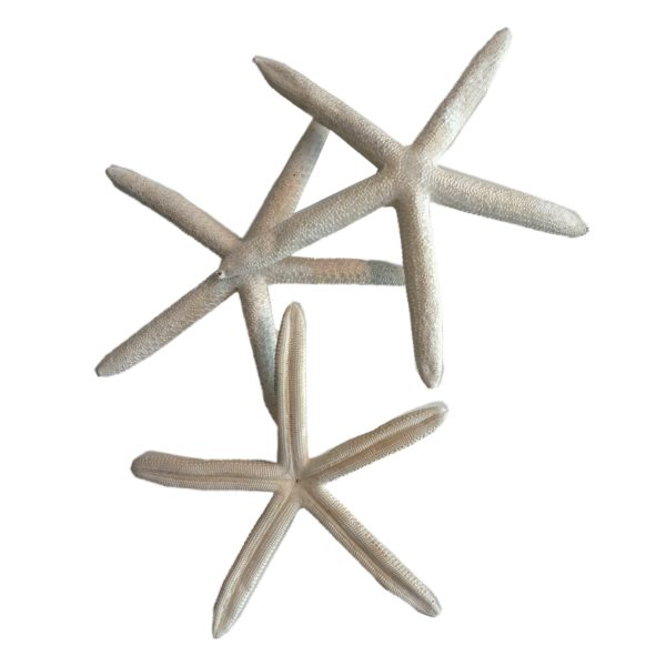 Stelle marine decorative vendita online